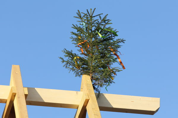 A spruce with colourful bands nailed to the roof skeleton